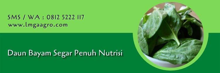 Manfaat Pepaya, Buah Penuh Gizi Pertanian Indonesia