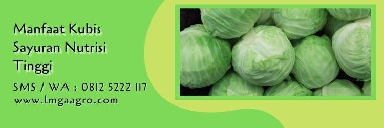 benih kubis sehati f1,sayuran,kubis,sayur kol,lmga agro