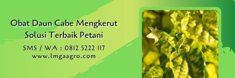 obat daun cabe mengkerut,pestisida,insektisida,obat hama,budidaya cabe,lmga agro