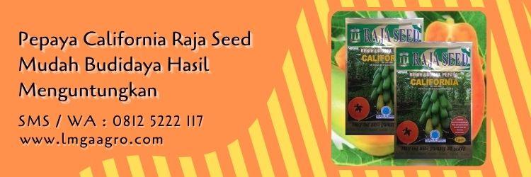 pepaya california raja seed,pepaya california,budidaya pepaya,benih pepaya,cara menanam pepaya,lmga agro