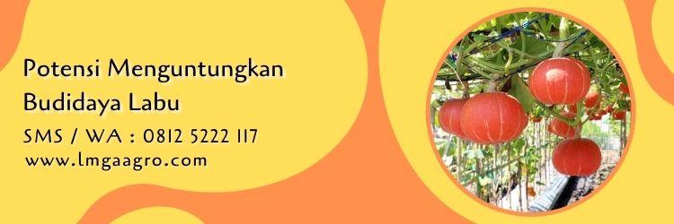 Labu Air/Blonceng, Kandungan Gizi Dan Manfaat Bagi Kesehatan