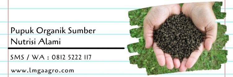 bagaimana proses pembentukan pupuk kompos,pupuk,pupuk organik,pupuk kimia,pupuk NPK,pupuk tanaman,lmga agro