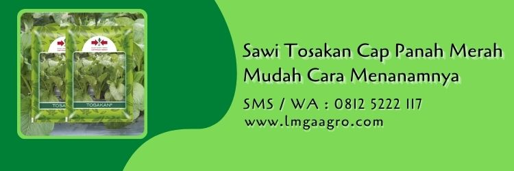sawi tosakan,budidaya sawi,benih sawi,cara menanam sawi,cap panah merah,lmga agro
