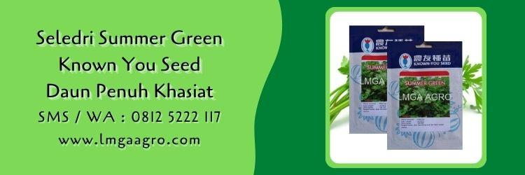 seledri summer green,known you seed,budidaya seledri,benih seledri,daun seledri,lmga agro