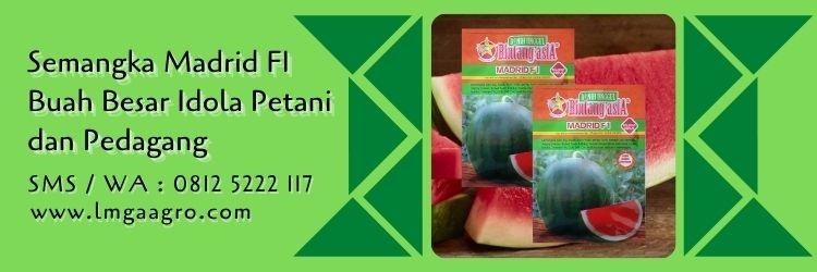 semangka madrid,semangka non biji,budidaya semangka,benih semangka,buah semangka,lmga agro