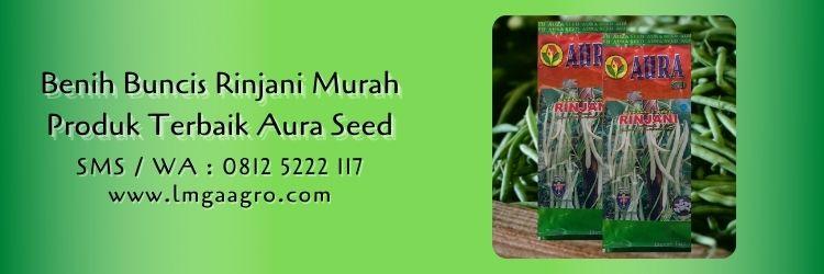 Jual Benih Buncis Rinjani Murah Produk Terbaik Aura Seed