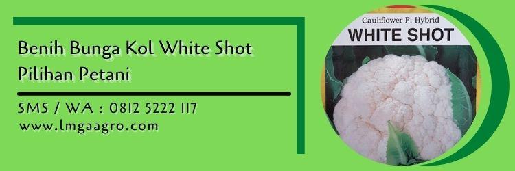 bunga kol white shot,budidaya bunga kol,benih bunga kol,kembang kol,bunga kol,lmga agro