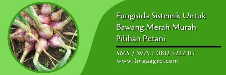 fungisida sistemik untuk bawang merah,bawang merah,fungisida sistemik,pestisida sistemik,obat hama,lmga agro