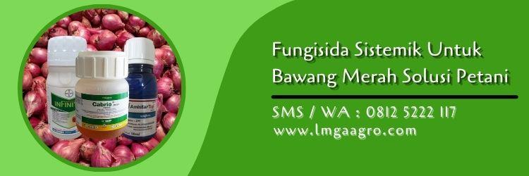 Fungisida sistemik untuk bawang merah,bawang merah,fungisida sistemik,pestisida,lmga agro