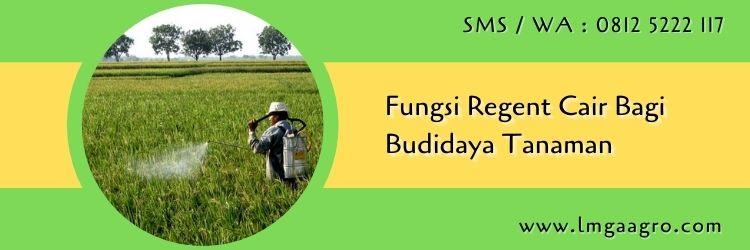 fungsi regent cair,budidaya tanaman,insektisida,pestisida,obat hama,lmga agro