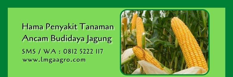 obat pembasmi ulat pada tanaman jagung,budidaya jagung,hama tanaman,jagung,lmga agro