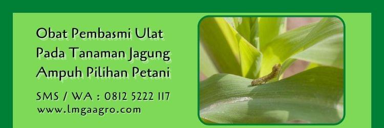 obat pembasmi ulat pada tanaman jagung,budidaya jagung,pestisida,insektisida,lmga agro