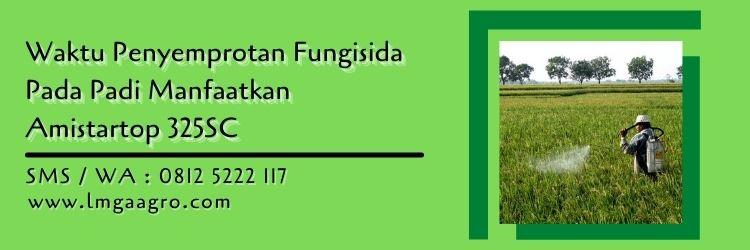 Waktu Penyemprotan Fungisida Pada Padi Manfaatkan Amistartop 325SC