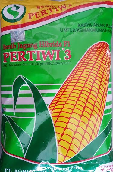 benih jagung,jagung hibrida,jagung pakan,jagung pertiwi