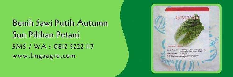 sawi putih autumn sun,sawi putih,budidaya sawi,benih sawi,sayuran hijau,lmga agro