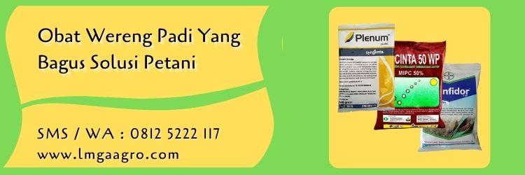 obat wereng padi yang bagus,budidaya padi,hama wereng,wereng,pestisida,insektisida,petani