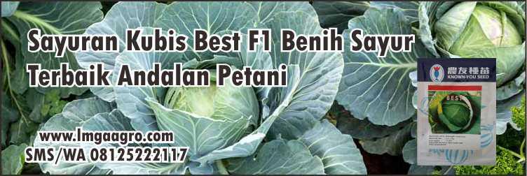 Hortikultura,Sayuran,Pertanian,Benih Tanaman Hibrida,Hidroponik