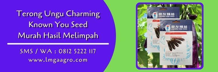 terong ungu charming,terong ungu,budidaya terong,benih terong,lmga agro