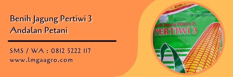jagung pertiwi 3,budidaya jagung,benih jagung,jagung pakan,lmga agro