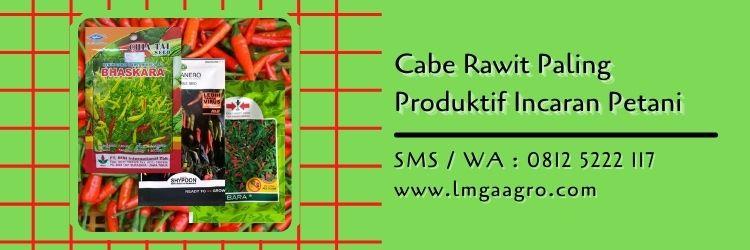 cabe rawit paling produktif,petani cabe,cabe rawit,benih cabe,budidaya cabe,lmga agro