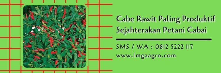 Cabe Rawit Paling Produktif Sejahterakan Petani Cabai