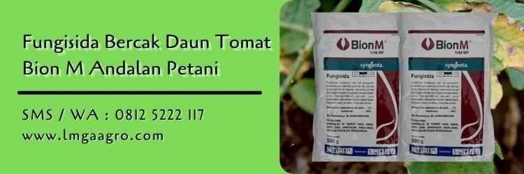 fungisida bercak daun tomat,fungisida,pestisida,budidaya tomat,petani,lmga agro