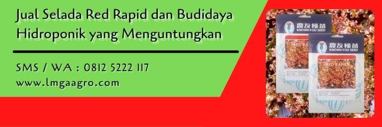 Jual Selada Red Rapid dan Budidaya Hidroponik yang Menguntungkan