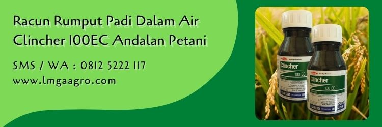 Racun Rumput Padi Dalam Air Clincher 100EC Andalan Petani
