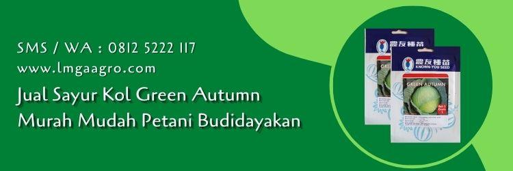 sayur kol green autumn,sayur kol,kubis,kol,budidaya tanaman,budidaya kubis,lmga agro